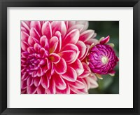 Framed Close-Up Of A Red Dahlia