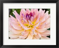 Framed Dreamcatcher Dahlia