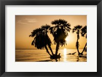 Framed Sunrise On The Beach, Through The Palms