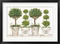 Framed Topiary Still Life