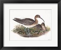 Framed Goulds Coastal Bird III