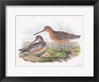 Framed Goulds Coastal Bird VIII