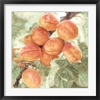 Framed Peach Branch