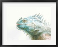Framed Tropical Iguana