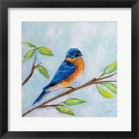 Framed Bluebird
