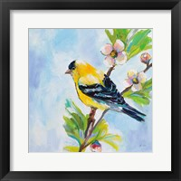 Framed Golden Finch