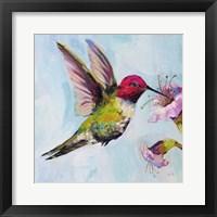 Framed Hummingbird I