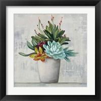 Framed Succulent Still Life I