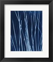 Framed Enchanted Cyanotype X