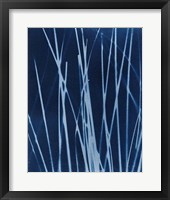 Framed Enchanted Cyanotype X