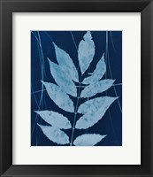 Framed Enchanted Cyanotype IX
