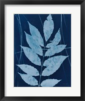 Framed Enchanted Cyanotype IX