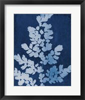 Framed Enchanted Cyanotype VII