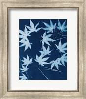 Framed Enchanted Cyanotype V