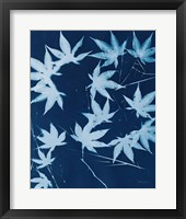 Framed Enchanted Cyanotype V