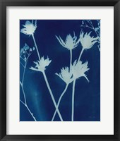 Framed Enchanted Cyanotype I