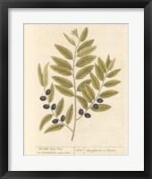 Framed Olive Branch I