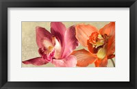 Framed Two Orchids