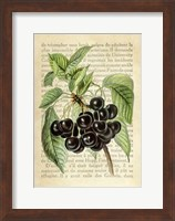 Framed Cherries, After J. Wright
