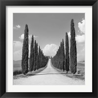 Framed Cypress alley, San Quirico d'Orcia, Tuscany (detail)
