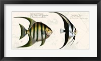 Framed Tropical fish II,  After Bloch