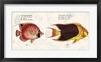 Framed Tropical fish III,  After Bloch