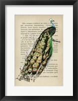 Framed Indian peafowl, After D'Orbigny