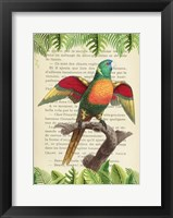Framed Blue-Headed Parrot, After Levaillant