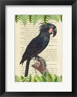 Framed Palm Cockatoo, After Levaillant