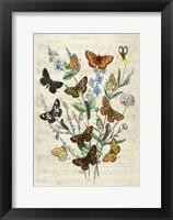 Framed European Butterflies, After Kirby