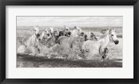 Framed Herd of Horses, Camargue