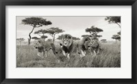 Framed Brothers, Masai Mara, Kenya (detail)