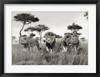 Framed Brothers, Masai Mara, Kenya