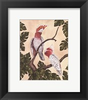 Framed White Mitchell Cockatoos