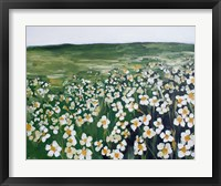 Framed Chamomile Field