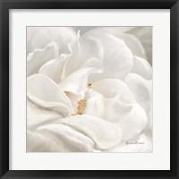 Neutral Rose No. 1 Framed Print