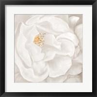 Neutral Rose No. 2 Framed Print