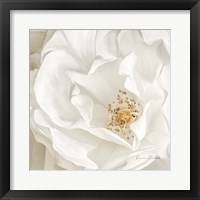 Neutral Rose No. 3 Framed Print