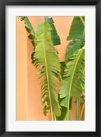 Framed Tropical Dream III