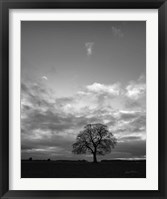 Framed Horizon Tree BW