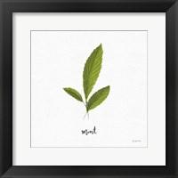 Framed Herbs VII White