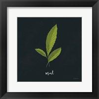 Framed Herbs VII Black