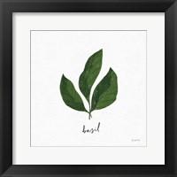 Framed Herbs VI White