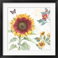 Framed Sunflower Splendor VII