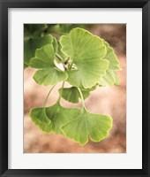 Framed Sprouting Ginkgo IV
