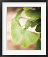 Framed Sprouting Ginkgo III