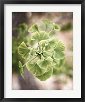 Framed Sprouting Ginkgo II