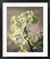 Framed Sprouting Ginkgo I