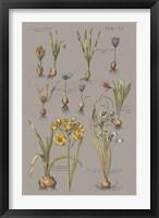 Vintage Florilegium II Gray Framed Print