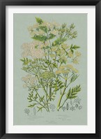 Flowering Plants III Green Linen Framed Print